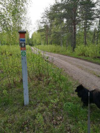 Pepe-koira Oulujoen pyhiinvaellusreitillä